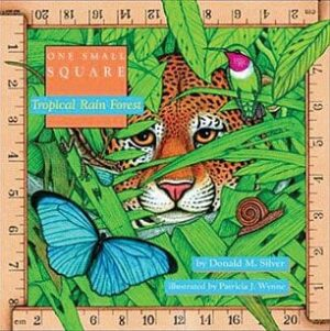 One Small Square: Tropical Rain Forest