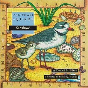 One Small Square: Seashore