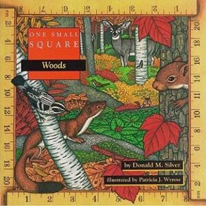 One Small Square: Woods