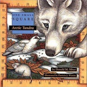 One Small Square: Arctic Tundra